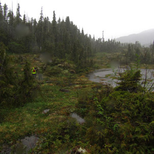 "Rainy day hike in Cedar Bay, Prince William Sound. Unanimous:""The best rain day ever!"""